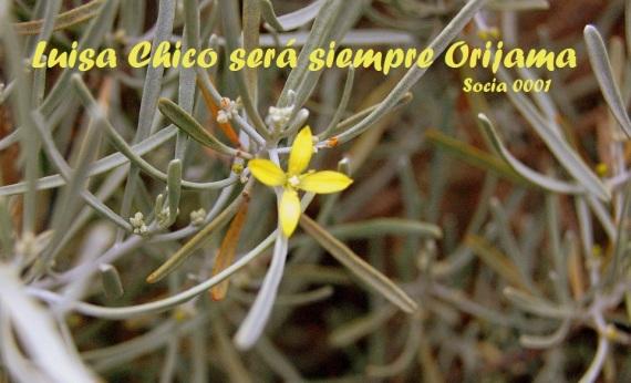 flor de orijama luisa